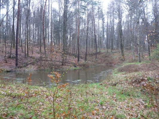 Das dritte der besuchten Biotope mitten im Wald.