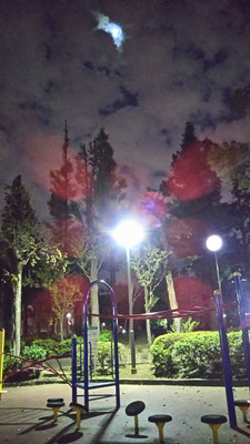 りえ&ゆうき/2020.10.06 23:41/東京、教育の森公園