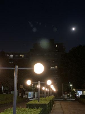 渡辺 篤/2020.10.29 17:36/東京都小平市、武蔵野美術大学
