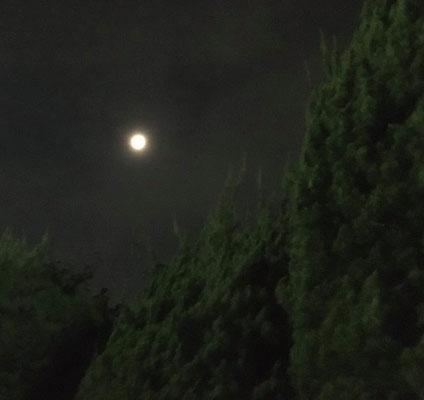 ふうちゃん/2020.05.30 21:29/東京都内