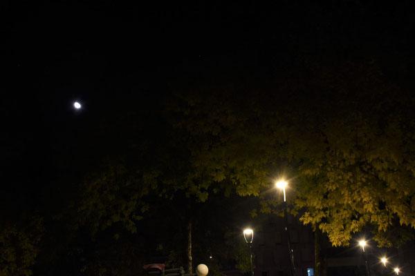 marmotte/2020.10.08 00:59/フランス、サンマルタンデール、公園