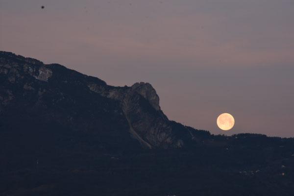 marmotte/2021.03.29 06:00頃/フランス、グルノーブル