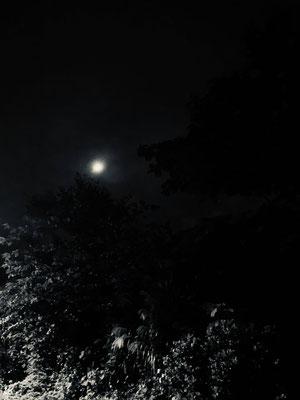 しっしー/2020.10.29 17:26/東京都内