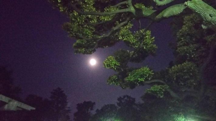 りえ&ゆうき/2020.06.10 00:29/東京都、文京区立大塚公園