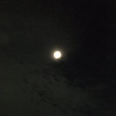 わか/2020.05.31 22:00頃/東京都、ベランダ