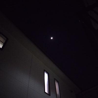 pinkuma/2021.04.19 19:29/川崎市内
