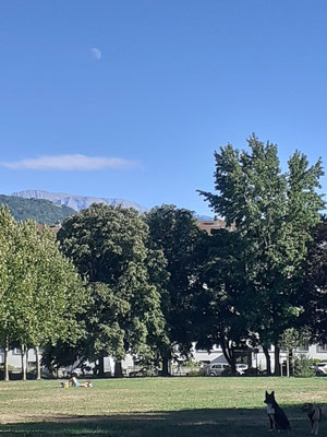 marmotte/2020.08.26 17:25/フランス、グルノーブル、近所の公園
