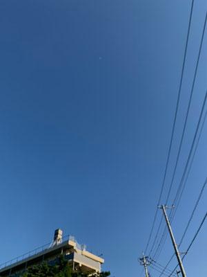 かねつなしほ/2020.05.29 16:00頃/東京都郊外、屋外