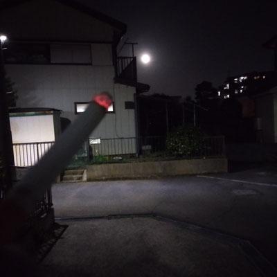 pinkuma/2021.03.29 19:52/川崎市内