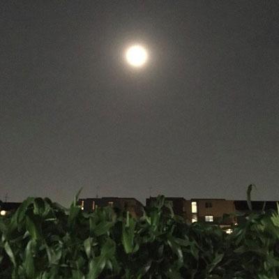 徳永 梓/2020.06.05 21:59/東京都練馬区