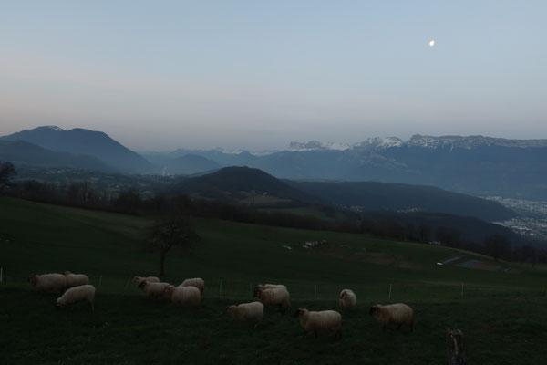 marmotte/2021.03.02 07:10/フランス、ロマージュ、ポワザ