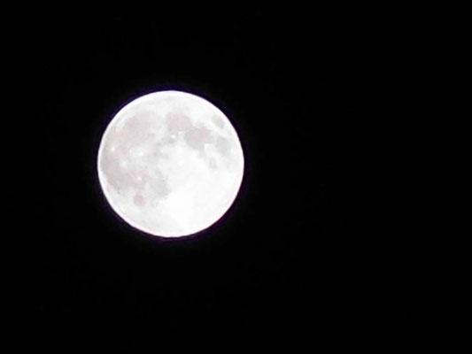 月見草/2020.04.08 01:35/宮崎県、自宅2階ベランダより
