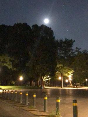 yororon/2020.08.02 20:32/東京都台東区上野公園
