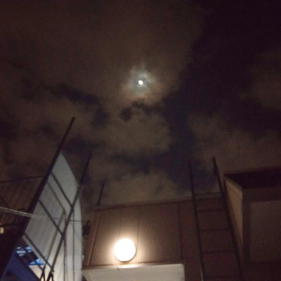 pinkuma/2021.04.23 20:03/川崎市内