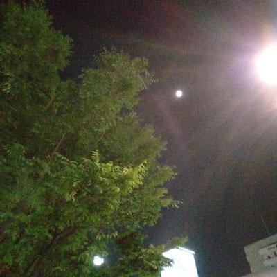 pinkuma/2021.05.22 21:35/横浜市桜木町