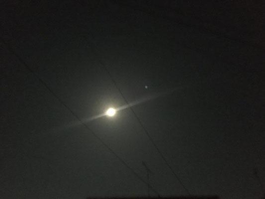ふうちゃん/2020.04.08 23:32/東京都都内