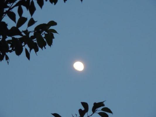 みひろ/2020.06.02 19:00頃/東京多摩地区の自宅付近高台