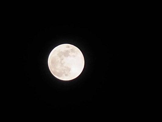 月見草/2020.05.07 21:11/宮崎県、自宅2階ベランダ
