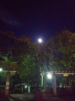 りえ&ゆうき/2020.11.28 17:37/東京、大塚公園