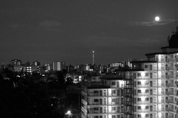 おしゃべりな絵本/2021.06.24/東京都板橋区