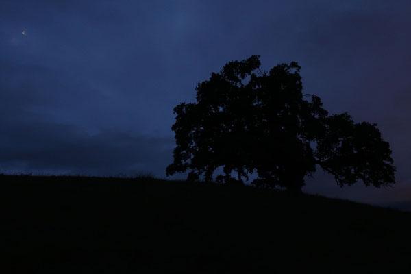 marmotte/2020.07.11 05:26/フランス、ヴノン、丘