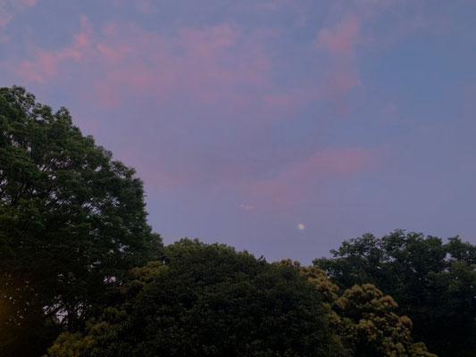 かねつなしほ/2020.06.03 17:00頃/東京都、代々木公園