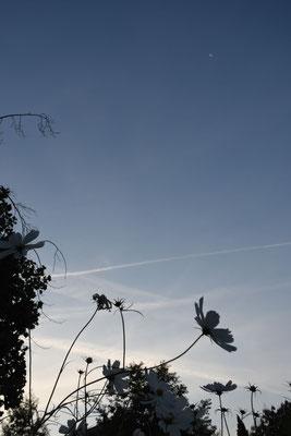 marmotte/2020.09.12 06:27/フランス、グルノーブル、近所の公園