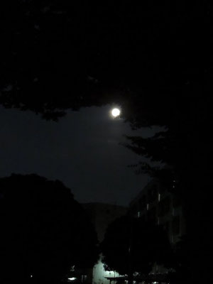 みひろ/2020.08.04 21:00頃/東京都西多摩地区自宅付近の都営住宅