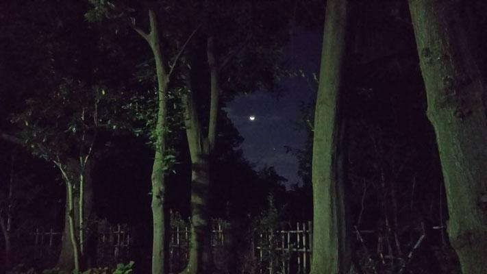 りえ&ゆうき/2020.10.14 03:32/東京、教育の森公園