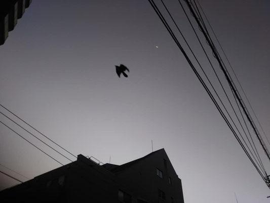 りえ&ゆうき/2020.11.11 06:16/東京、新大塚