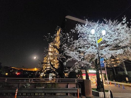 らばんか/2021.03.29 19:00頃/横浜市