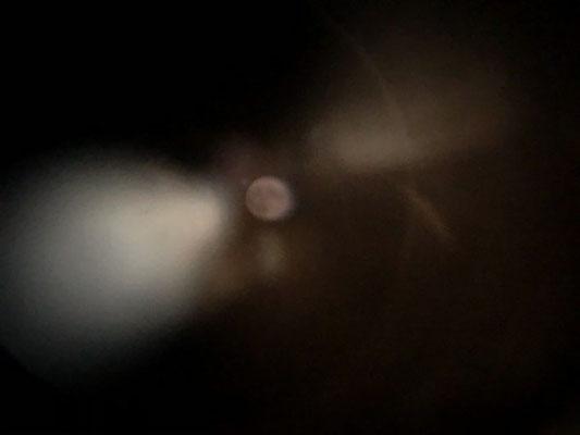藤/2020.08.04 21:28/東京都23区内