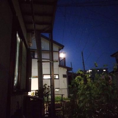 pinkuma/2021.04.26 18:58/川崎市内