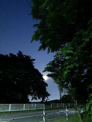 miki/2020.06.05 19:50/仙台市、犬の散歩の途中