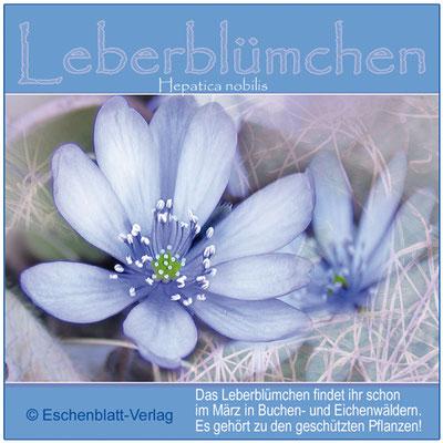 Natur-Info zur Blüte als Frühlings- und Osterdeko 3