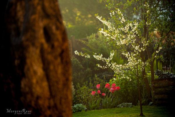 Kleiner Kirschbaum