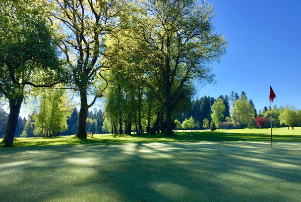 Alter Baumbestand sorgt für Schatten, Grün 14