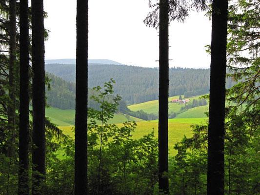 Am Waldrand entlang geht der Blick immer wieder hinüber zu farbsatten Wiesen und Hügeln.