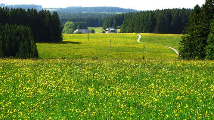 Der mittlere und südliche Schwarzwald ist offener und abwechslungsreicher als der nördliche Teil.