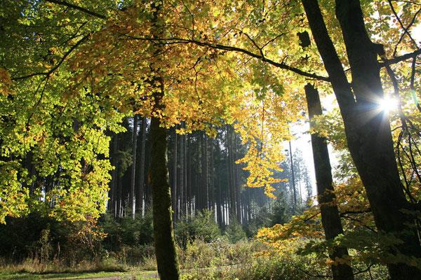 Im Wellness-Wald bei Lützenhardt