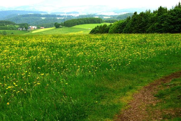 Immer wieder dieses satte Naturgrün, diese Weite und Offenheit.