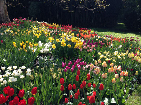 Tulpen-Farborgie
