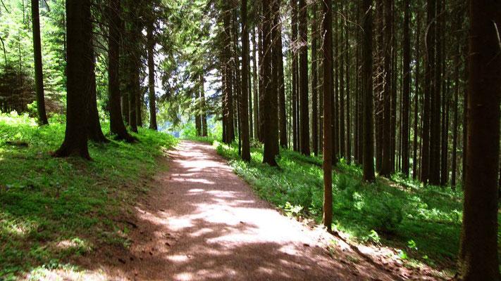 Wald, Sonne, schöne Wege. Eine angenehme Etappe.