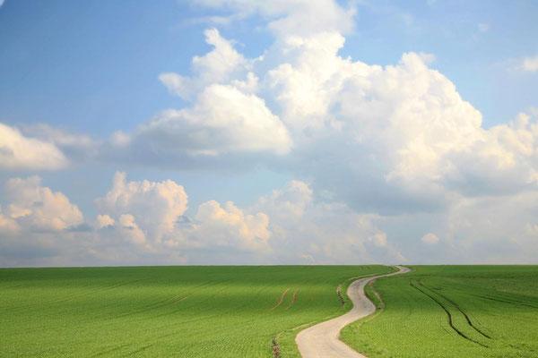 Landwirtschaft bei Horb/N.