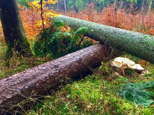 Im Tumlinger Forst