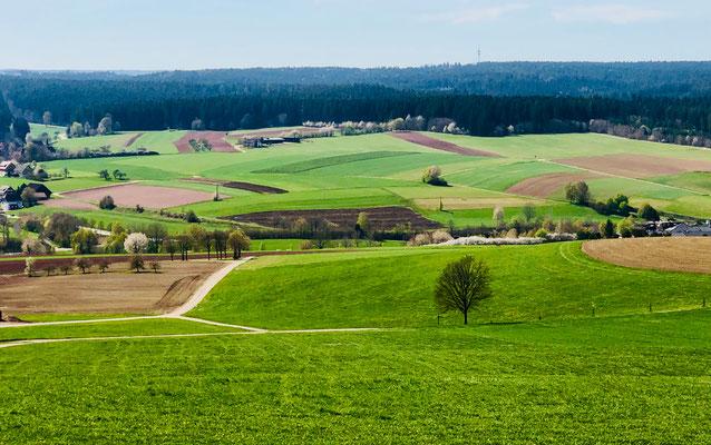 Blick vom Schellenberg ins Waldachtal mit Hörschweiler