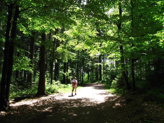 Bei hochsommerlichen Mai-Temperaturen weiter durch frühlingshafte Mischwälder