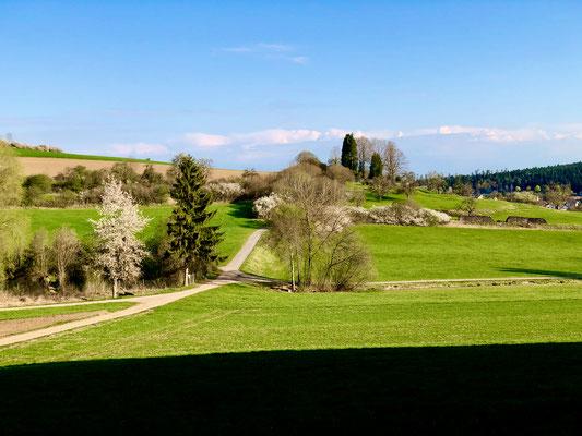 Riedhalde, Lemle-Fischweiher und St. Hilarius-Friedhof