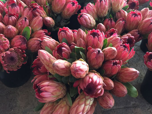 Auf dem Samstagmarkt: Protea