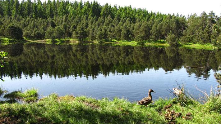 Nach dem Anmarsch durch sumpfiges Unterholz belohnt dann der Blick auf die urwüchsige See-Idylle.